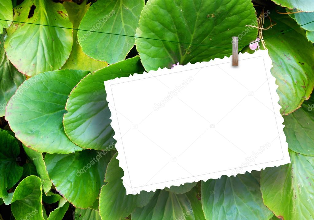 One hanged postcard with clothes pin on leaves