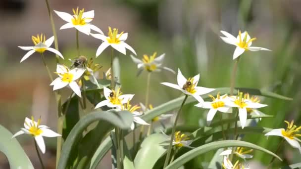 Hmyz létat nad květiny