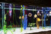 Die Unterwasser-Welt. Hellen exotischen tropischen Korallen Fische in die R