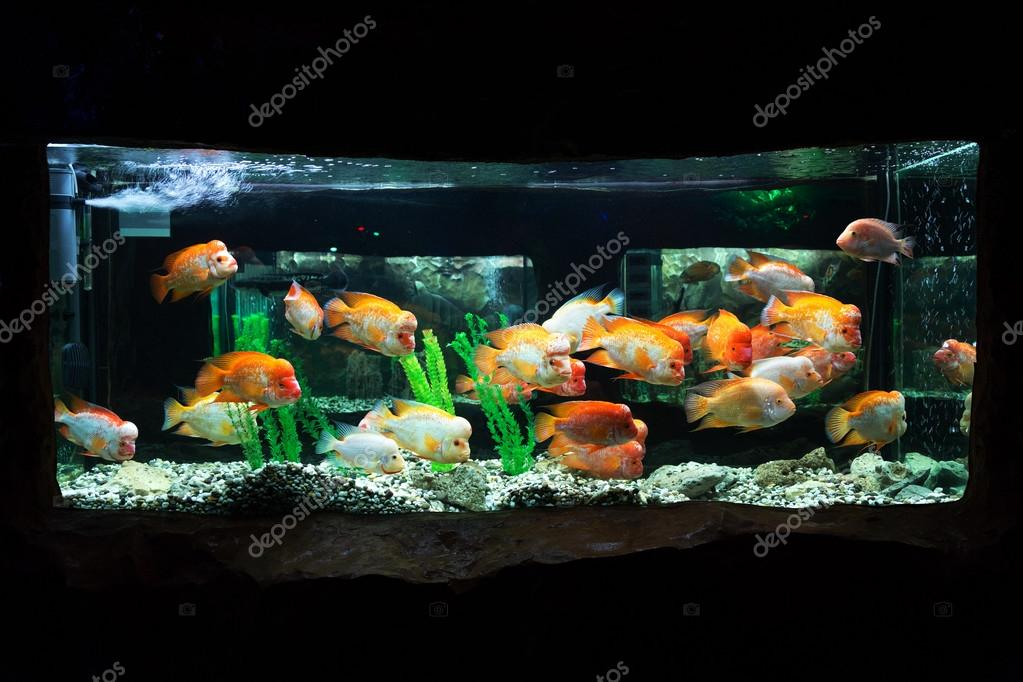 The underwater world. Bright Exotic Tropical coral fish in the R
