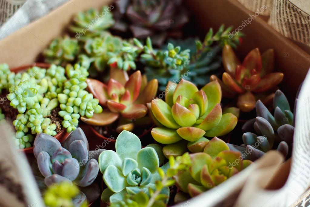 Beautiful multi-colored cactus succulents