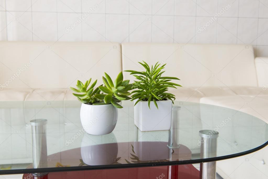 binnen plant in een badkamer venster — Stockfoto © wayne0216 #99354850