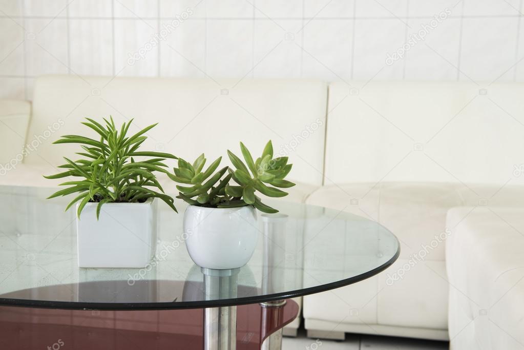 binnen plant in een badkamer venster — Stockfoto © wayne0216 #99354886