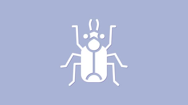 White Beetle bug icon isolated on purple background. 4K Video motion graphic animation
