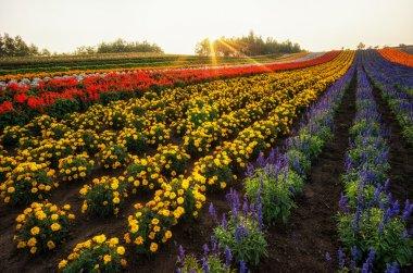 Japanese Flower Farm