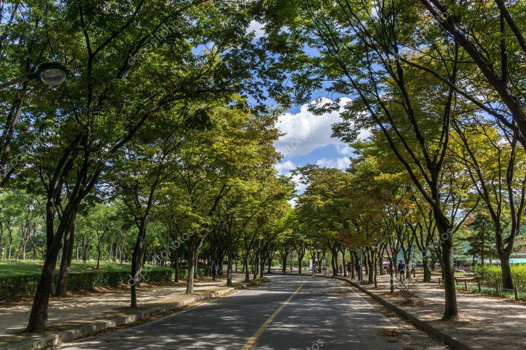 Incheon Grand Park early autumn
