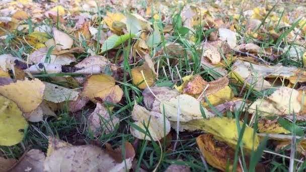 The seasons - autumn