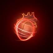 Fotografia Visualizzazione del cuore umano è costituito da righe al neon