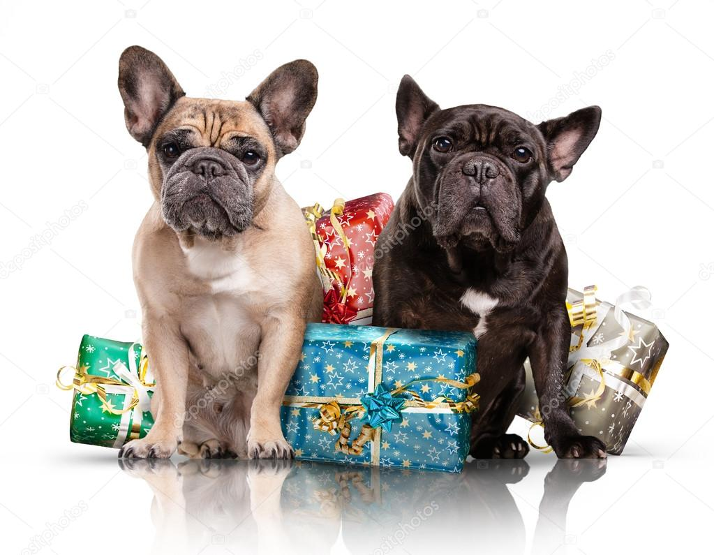 French bulldogs with christmas gifts — Stock Photo © _italo_ #89153686