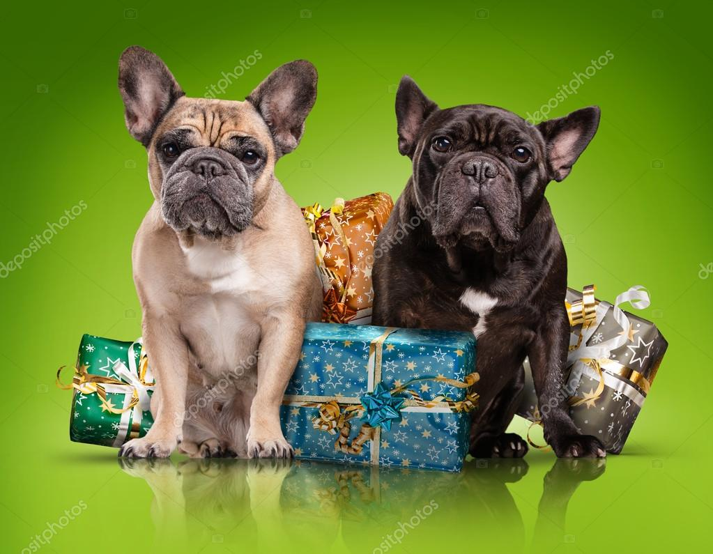 French bulldogs with christmas gifts — Stock Photo © _italo_ #89153840