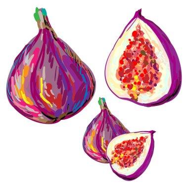 Hand drawn figs Set