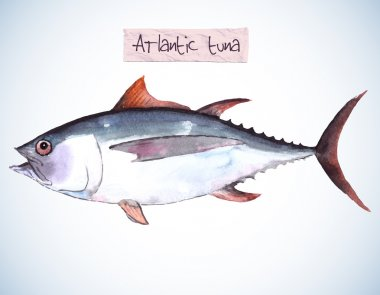 Sea fish - a tuna