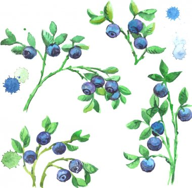 Watercolor set of bilberries with branches