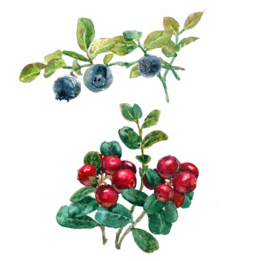 forest berries with leaves