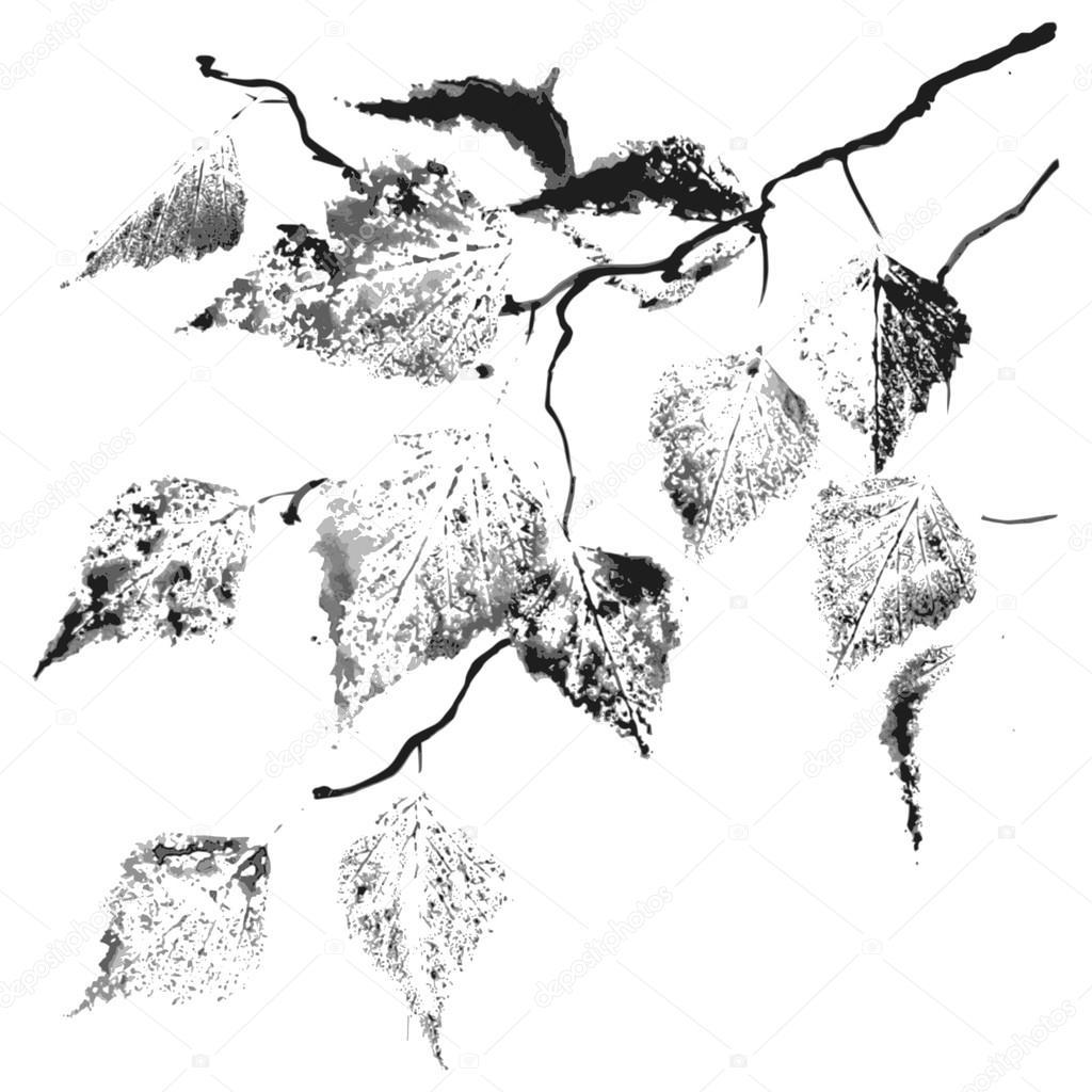 rama del árbol de abedul — Vector de stock © Irina_Oksenoyd #84963132