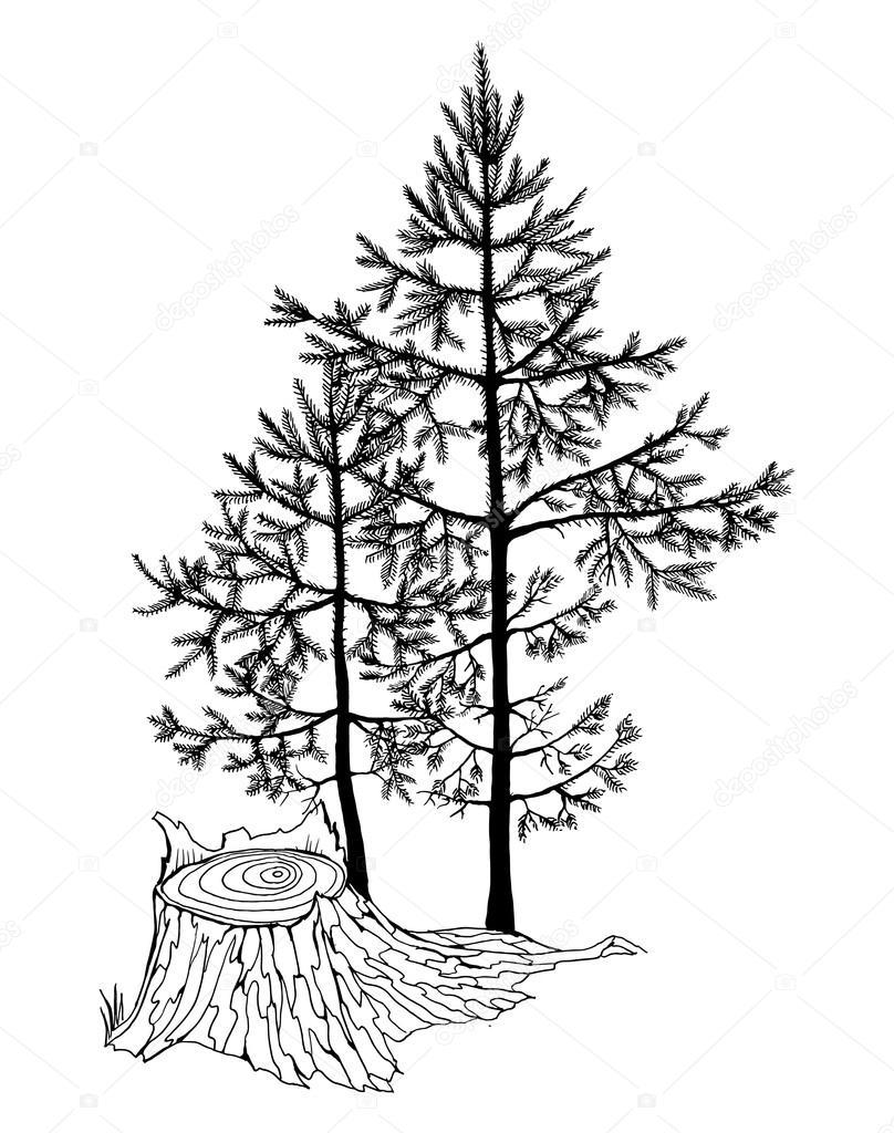 Piccoli Abete Alberi In Una Foresta Vettoriali Stock
