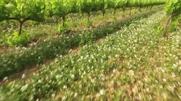 Vinice plodin na letecký pohled na jaře