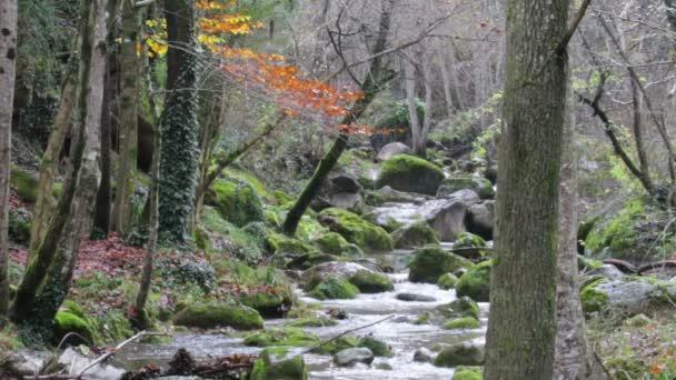 Vinutí Creek kaskád v dešti na podzim