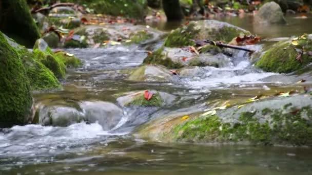 Cascade Creek padlých červené listy na podzim