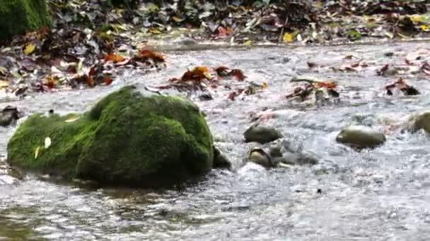 Mocný potok v podzimní panoramatický pohled
