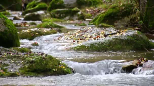 Winding Creek Cascades in Fall Racking Focus