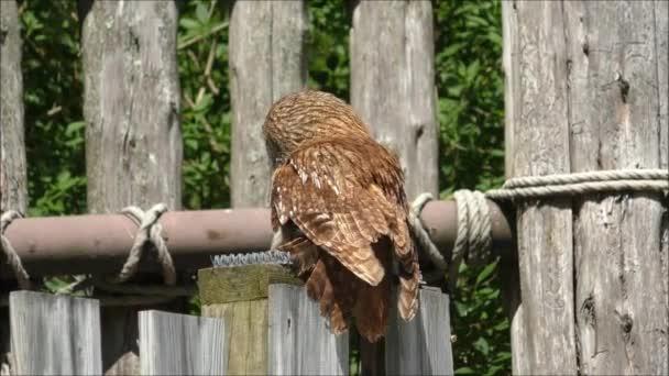Věštcem na plot