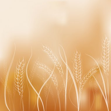 Gradient mesh background with hand drawing  wheat ears