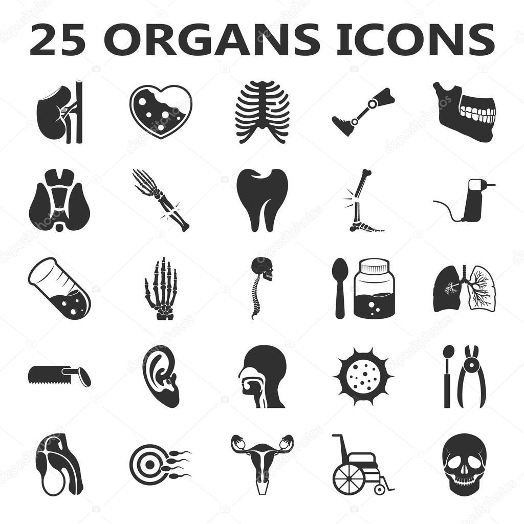 Orgeln Set 25 schwarz einfache Symbole. Körper, Anatomie ...