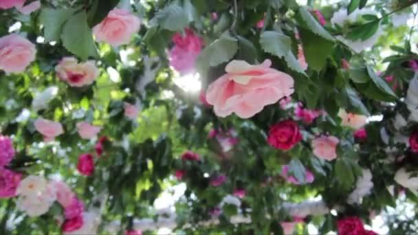 svatební dekorace klenby s čerstvými květy růže