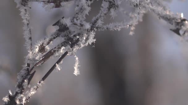 téli fagy