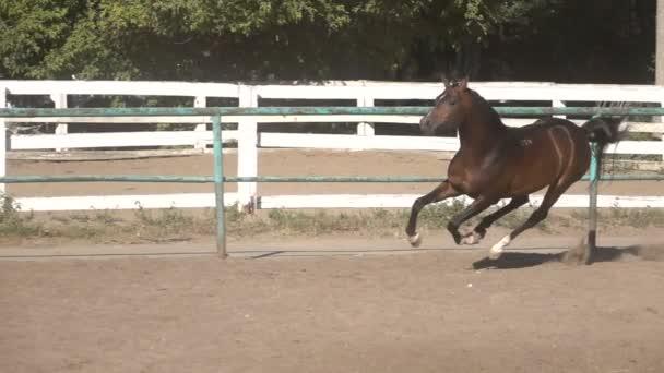 Vzpínajícího se koně na písku