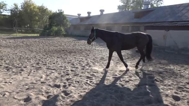 Slow motion video camminare il cavallo paddock in sabbia