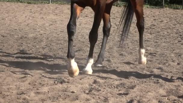 Horse hoof horseshoe slow motion video