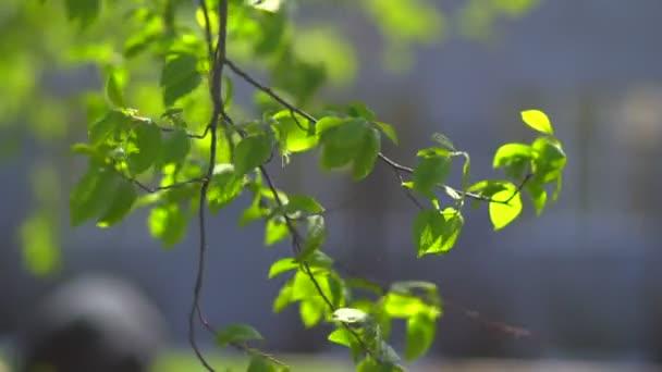 Pomalu listy mávat ve větru