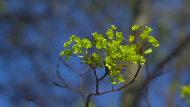 Green flowers on a tree