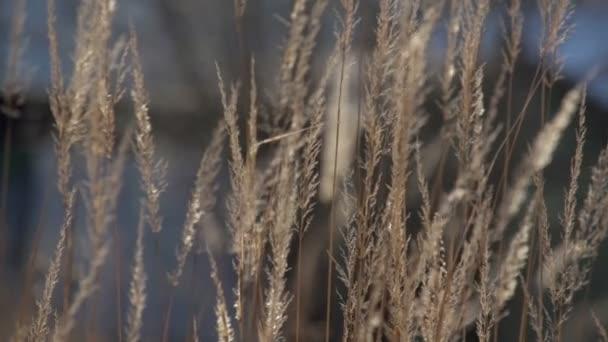Suché trávy na jaře 3