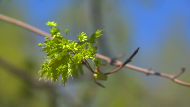 Banda zelené na větvi