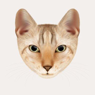 Vector Portrait of Cat. Red Tabby Kitten, Hand-drawn Illustration.