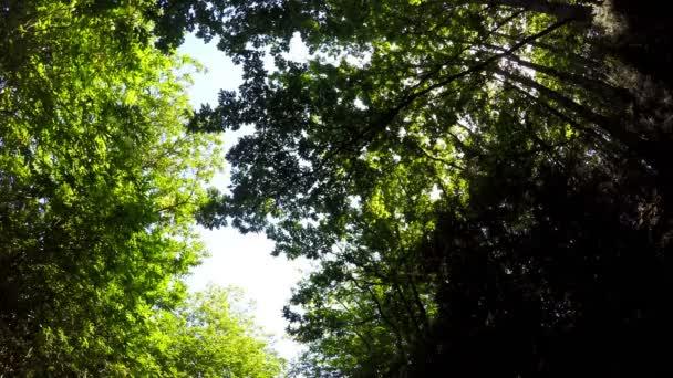 Erdő, fák, ég és a nap, kamera kocsi, 4k