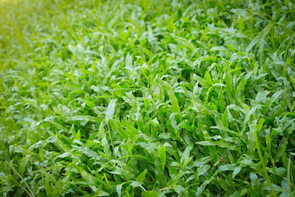 Gras In Tuin : Groen boom groen gras in tuin houten omheining stock afbeelding