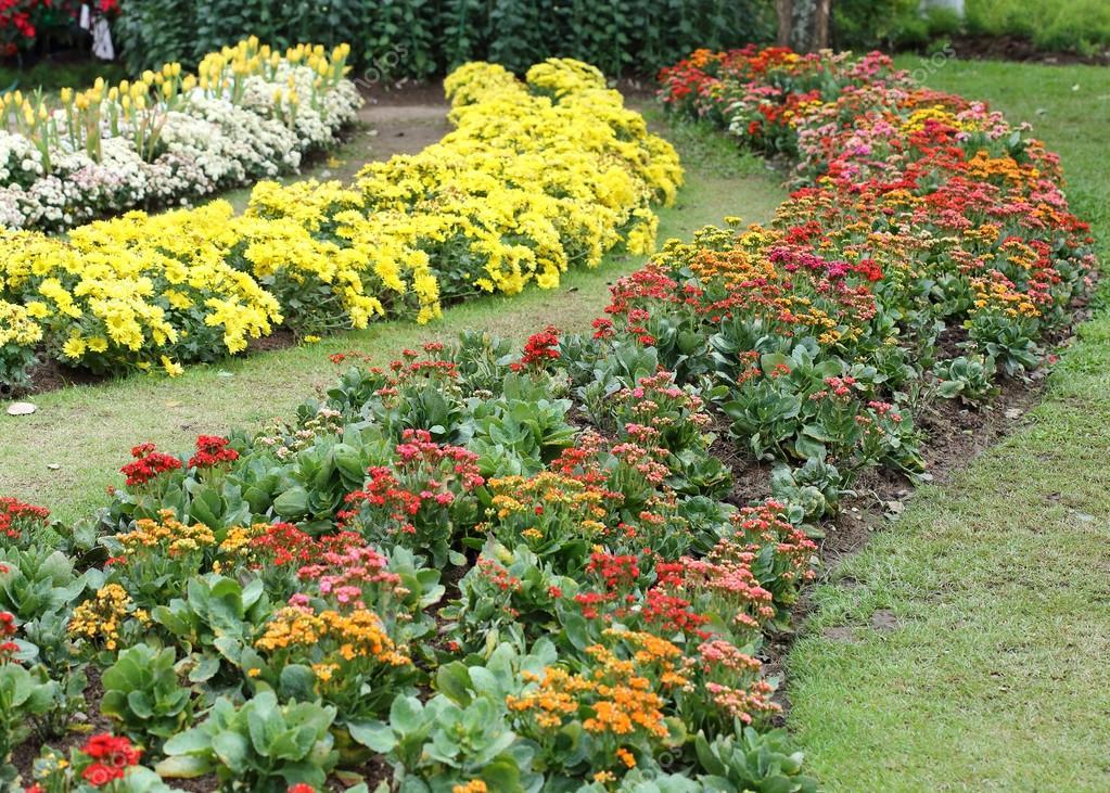 Schöne Blume Blumen Garten Stockfoto Sutichak 63814195