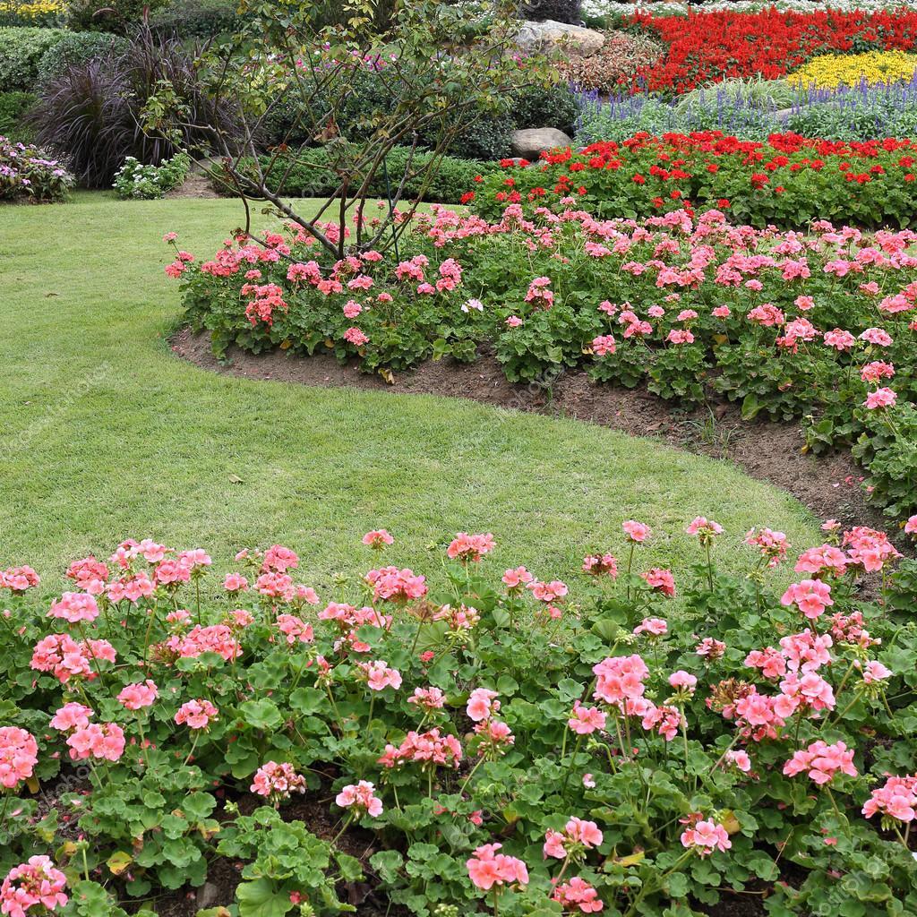 Fiori rosa in giardino con prato verde foto stock for Fiori in giardino