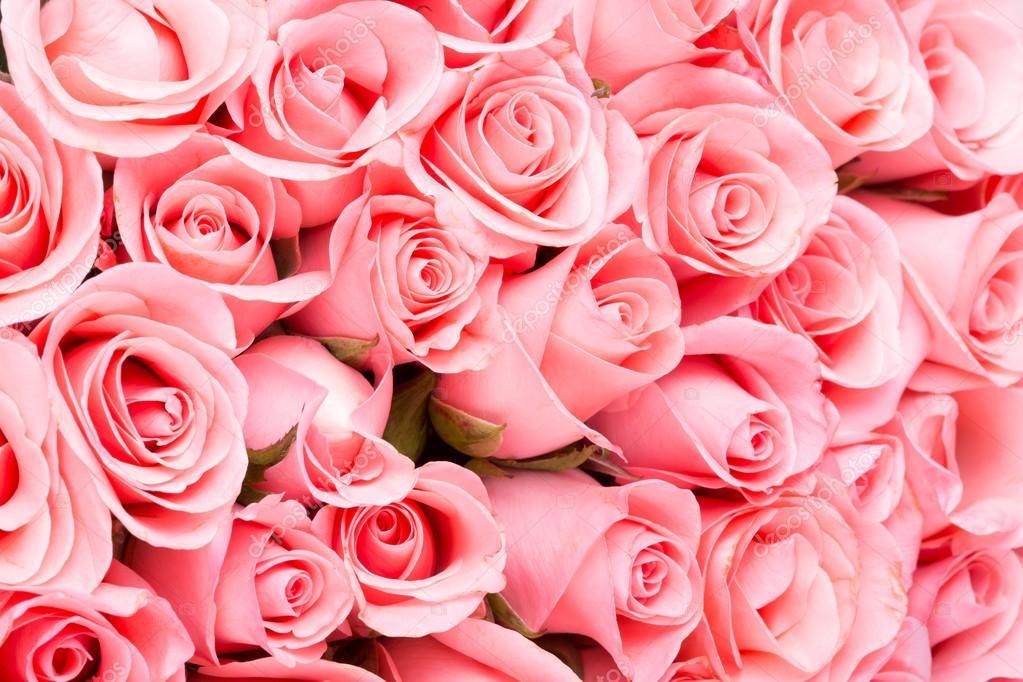pink rose flower bouquet background — Stock Photo © Sutichak #71969167