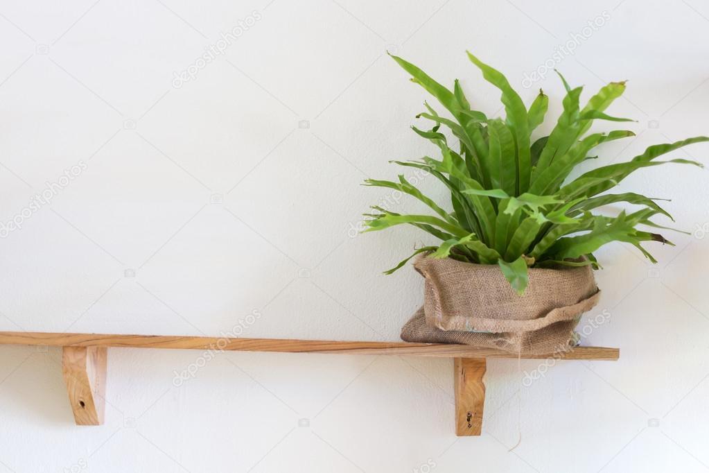 Pianta di piccolo albero in vaso sulla mensola di legno decorate