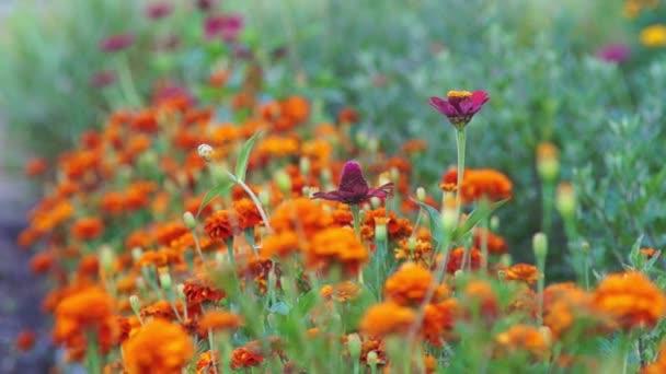 letní květy pozadí