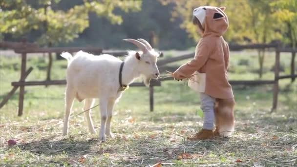 Roztomilý malý chlapec v kostýmu lišky krmí bílou kozu na podzimní farmě