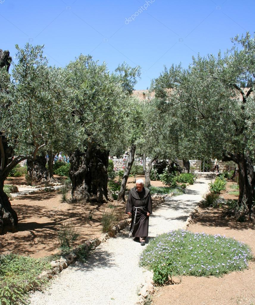 Garden Of Gethsemane Jerusalem Israel Stock Editorial Photo C Kateafter 91007128