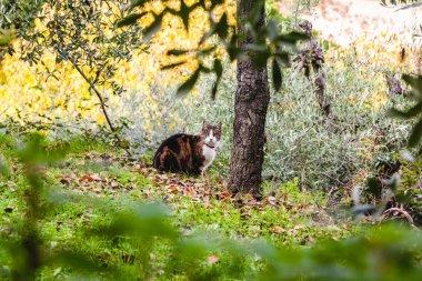 A cat strolling through San Gimignano. Tuscany, Italy