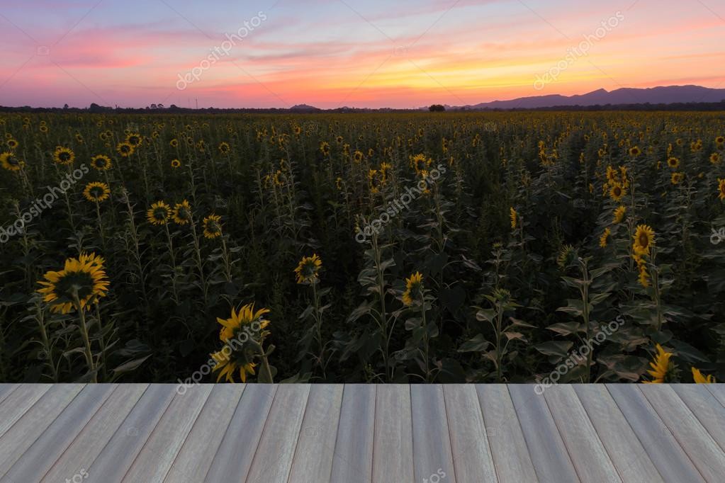 Houten vloer over zonnebloem veld openen u stockfoto pranodhm
