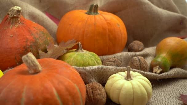 Složení dýně, vlašských ořechů a podzimních listů. Padající podzimní listí zpomaleně. Podzimní zátiší. Halloween holiday.